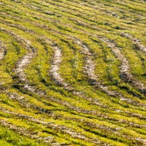 Abstract lines in the field